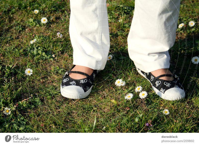 im grünen Frau Mensch Natur grün weiß schön Sommer Erwachsene feminin Frühling Mode Schuhe stehen Rasen einfach Gänseblümchen