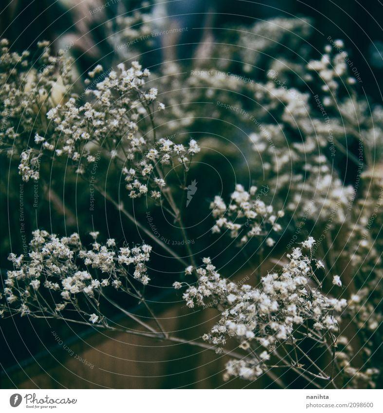 Getrocknete schöne Blumen für Hauptdekoration Natur Pflanze Spiegel dunkel authentisch einfach einzigartig retro schwarz weiß Leben Nostalgie rein Stil