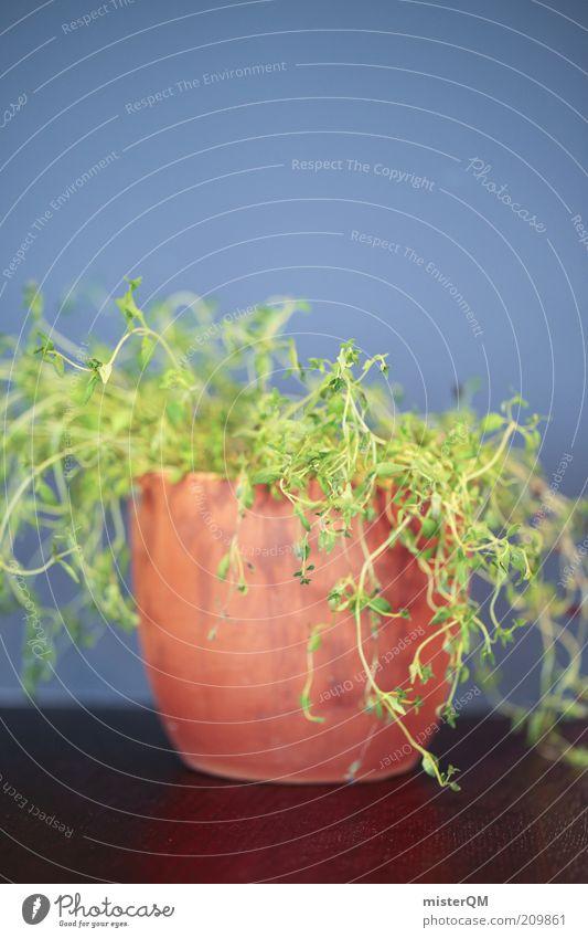 Die Gertrud. Pflanze ästhetisch Topfpflanze Zimmerpflanze grün Wachstum Unkraut Nutzpflanze Kräuter & Gewürze Farbfoto Gedeckte Farben Innenaufnahme