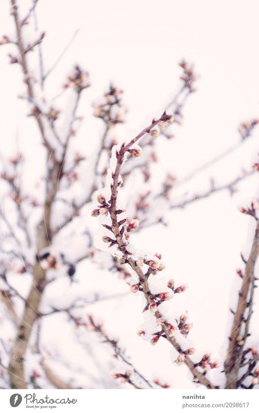 Snowy und blühende Niederlassung - ein lizenzfreies Stock Foto von ...
