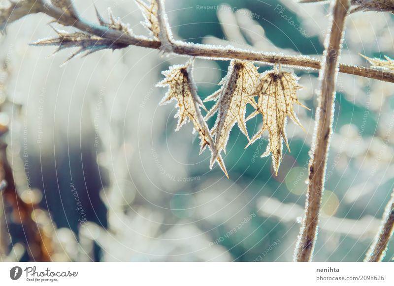 Gefrorene Pflanzen mit einem schönen Bokeh Umwelt Natur Urelemente Sonne Winter Klima Schönes Wetter Eis Frost Schnee Blatt Grünpflanze Wildpflanze Wiese