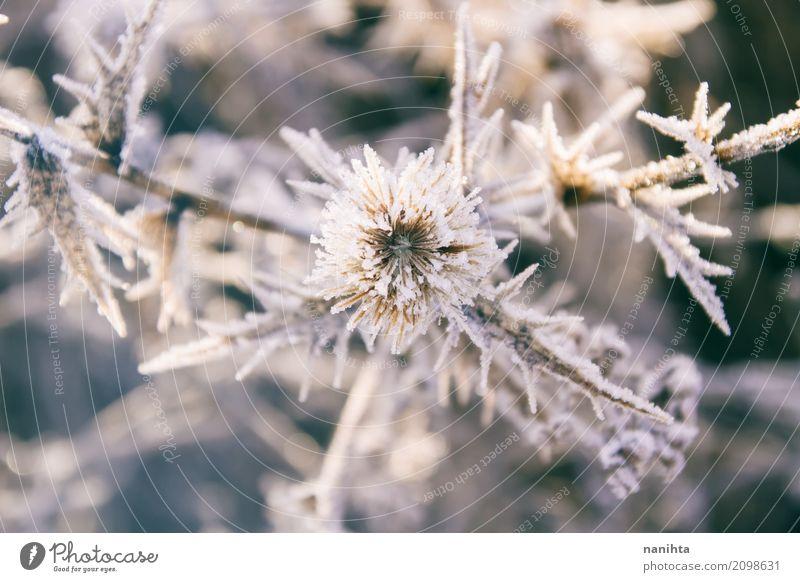 Schöne eisige Pflanzen Umwelt Natur Sonne Winter Klima Wetter schlechtes Wetter Eis Frost Schnee Grünpflanze Wildpflanze kalt natürlich wild grau weiß Leben