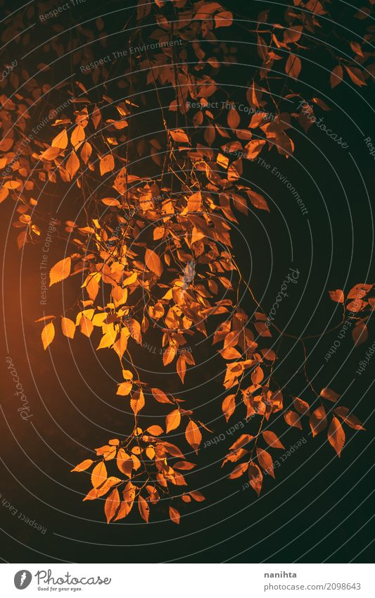 Goldene Blätter in der Nacht Natur Nachthimmel Herbst Pflanze Blatt authentisch elegant natürlich gelb orange schwarz Ast einfach Ton-in-Ton Wärme