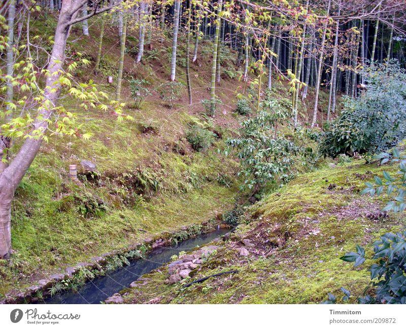 Einmal in Japan. Natur Landschaft Wasser Pflanze Baum Bambus Park Blick groß Gefühle Stimmung Bach Japanisch Zweige u. Äste Sträucher Wald Gras Farbfoto