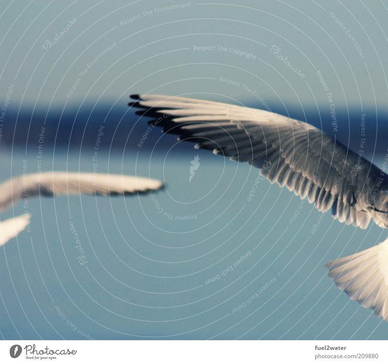 Wings Vogel Flügel 2 Tier ästhetisch elegant fantastisch blau grau schwarz weiß Zufriedenheit Bewegung Möwe Farbfoto Gedeckte Farben Außenaufnahme Kontrast