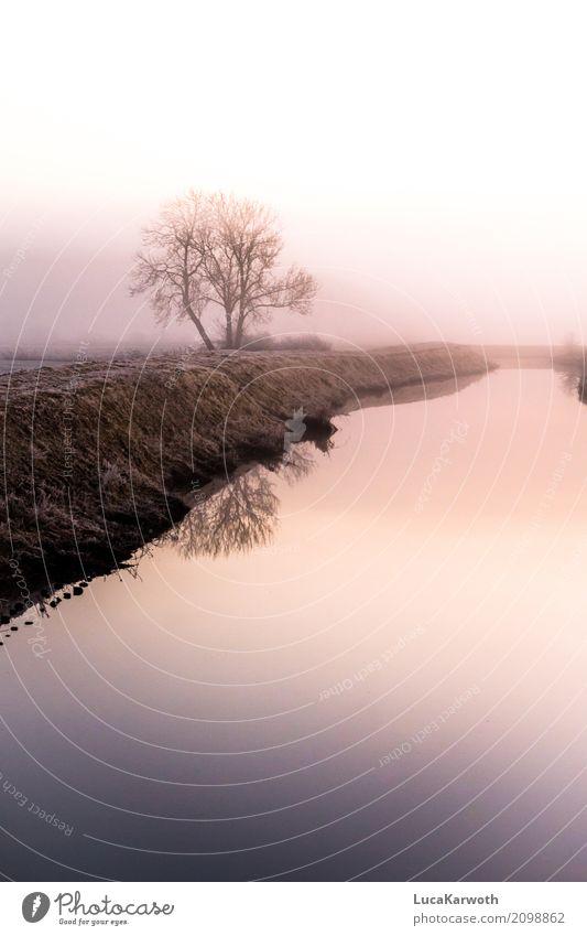 Winterstimmung Umwelt Natur Landschaft Pflanze Urelemente Wasser Sonnenaufgang Sonnenuntergang Wetter Nebel Eis Frost Baum Gras Küste Flussufer Deutschland