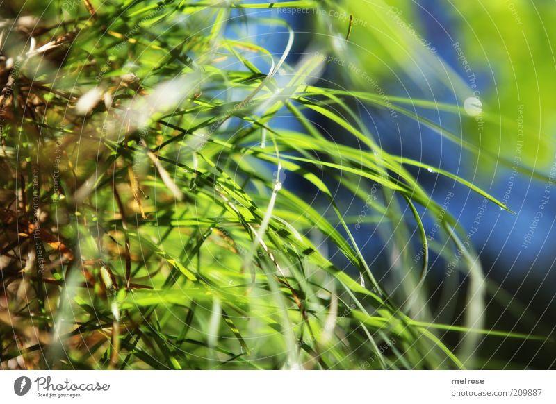 über mir der Himmel so blau ... Sommer Natur Wassertropfen Gras grün ruhig Farbfoto Nahaufnahme Menschenleer Morgen Schatten Lichterscheinung Unschärfe Tau