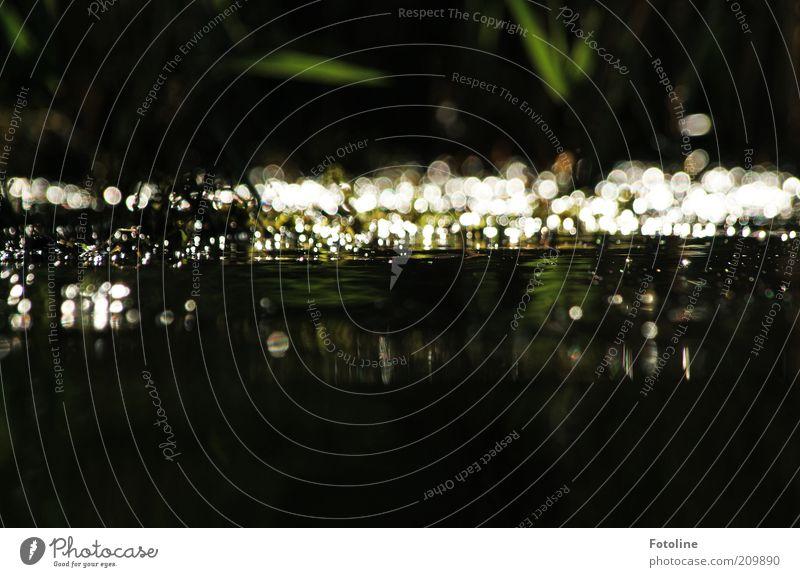 Funkelsee Natur Wasser dunkel See glänzend Umwelt nass natürlich leuchten Seeufer Urelemente Reflexion & Spiegelung Wasseroberfläche Lichtfleck Wasserspiegelung