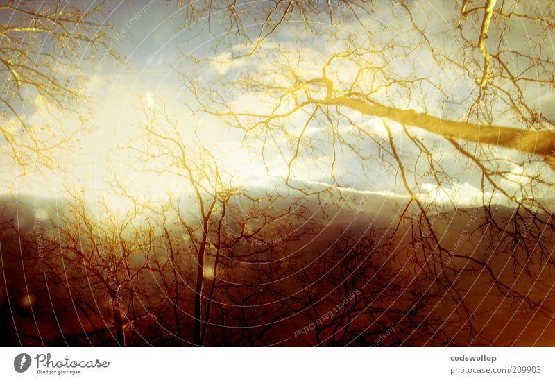 sur la route de carcassonne Natur Himmel Baum Winter Berge u. Gebirge Wärme Landschaft Umwelt ästhetisch Klima fantastisch aufwärts Doppelbelichtung kahl Geäst