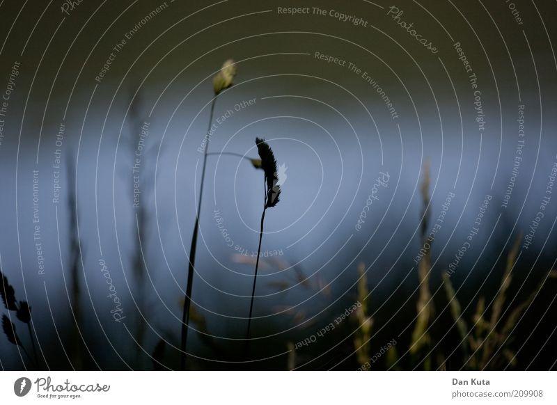 Die dunkle Seite der Nacht. Natur Pflanze dunkel Herbst Gras Traurigkeit Trauer Vergänglichkeit Halm