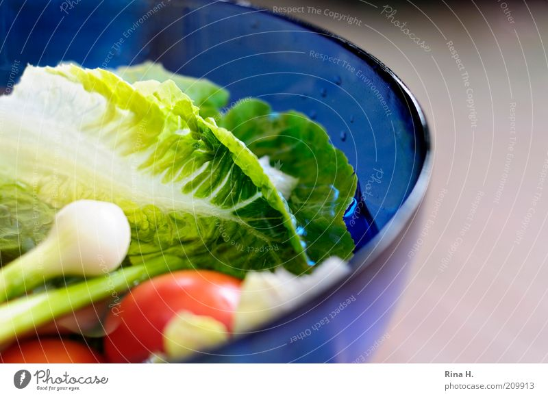 Vitamine grün blau rot Ernährung Gesundheit Lebensmittel frisch Gemüse Tomate Diät Bioprodukte Schalen & Schüsseln Salatbeilage Salat Vegetarische Ernährung Salatblatt