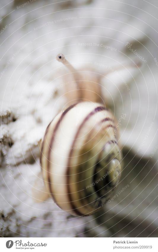 250 mm pro Stunde Natur schön Sommer Haus Auge Tier Wand Linie lustig Umwelt Tiergesicht Wildtier Schnecke krabbeln Schneckenhaus Schneckenabwehr