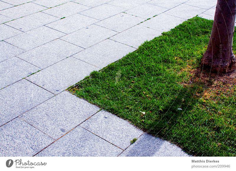 Insel Natur Stadt grün Baum Pflanze Sommer Umwelt grau natürlich Platz modern authentisch Fliesen u. Kacheln Baumstamm Marktplatz Barcelona