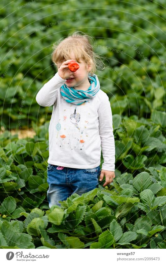 Im Erdbeerfeld III Mensch Kind Pflanze blau grün Gesunde Ernährung weiß rot Mädchen Frucht Feld Kindheit groß süß Süßwaren Ernte