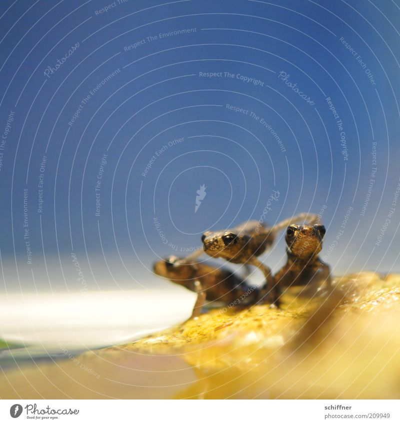 Horst turnt Tier Frosch 3 Tiergruppe Rudel klein Neugier Zusammenhalt Freundschaft beweglich Spielen winzig Nahaufnahme Makroaufnahme Froschperspektive