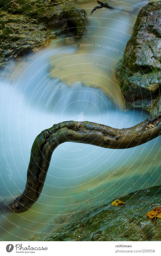 Bachlauf Natur Wasser Moos Schlucht Fluss Wasserfall Stein Allerheiligenberg Ast Cholersbach Hägendorf Schweiz Solothurn Teufelsschlucht Tüfelsschlucht Farbfoto