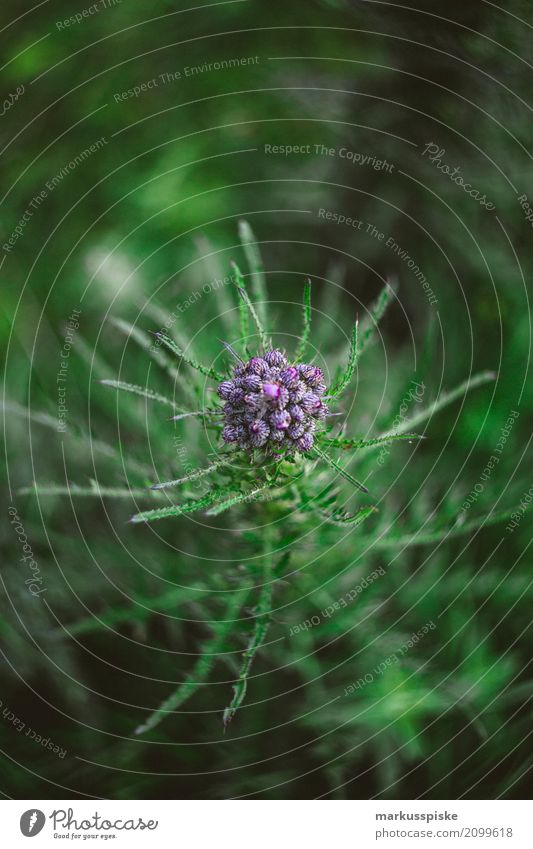 Wildblume Swirly Bokeh Natur Ferien & Urlaub & Reisen Pflanze Sommer Blatt Tier Umwelt Frühling Garten Ausflug Wachstum Abenteuer Lebensfreude beobachten