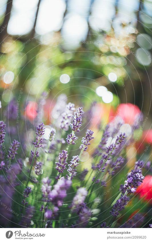 Blumen Garten Natur Pflanze Sommer Sonne Landschaft Blatt Tier Umwelt Blüte Frühling Gras Ausflug Wachstum Sträucher