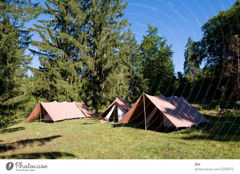besser als 5* Lifestyle Freizeit & Hobby Ferien & Urlaub & Reisen Ausflug Freiheit Camping Sommerurlaub Erlebnispädagogik Natur Gras Tanne Wiese Wald Zeltlager