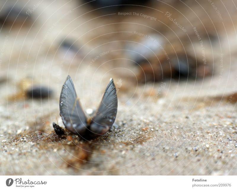 gestrandet Natur Meer Sommer Strand Sand hell Küste Umwelt nass Erde natürlich Urelemente Muschel Makroaufnahme Strandgut