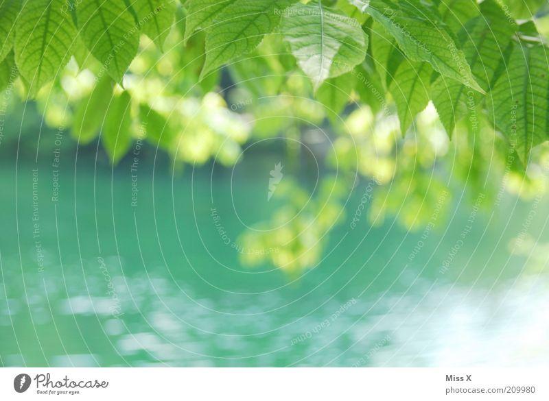 Sommerlaune Natur Baum grün Blatt Frühling See Park Küste Fluss rein zart Idylle Schönes Wetter Bach Blätterdach