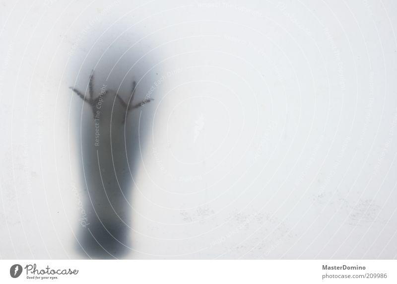 Buh! Fenster Oberlicht Tier Wildtier Vogel Krallen 1 Blick stehen frech lustig Neugier oben grau weiß gefährlich Kreativität Freude Geister u. Gespenster