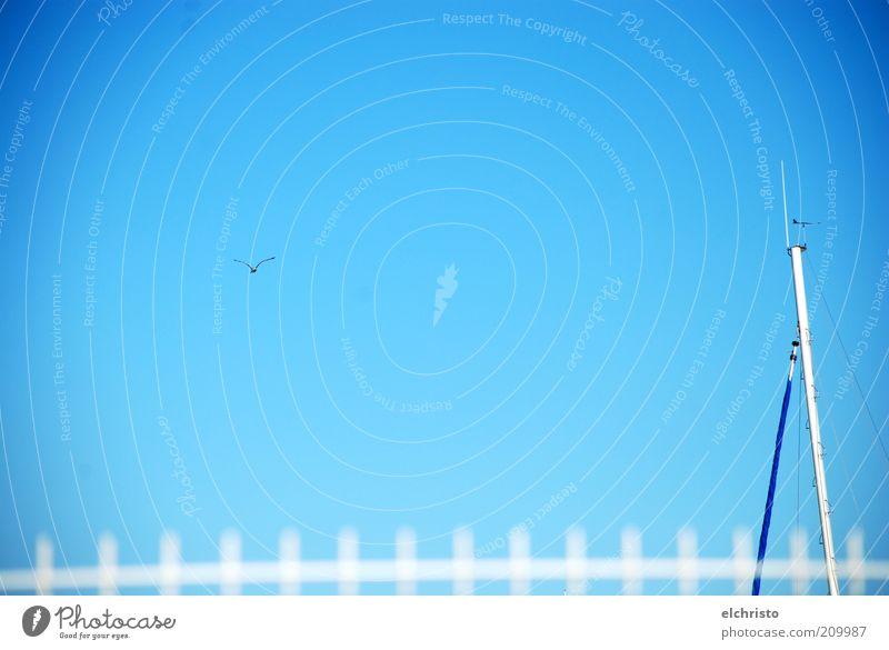 Über Grenzen hinweg Himmel Schönes Wetter fliegen Möwe Zaun Barriere Wasserfahrzeug Mast weiß himmelblau Freiheit Ferne Flügel Farbfoto Außenaufnahme
