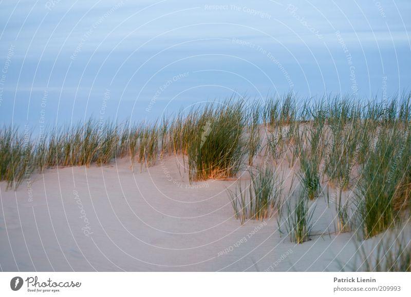 after sunset Natur Himmel Meer Pflanze rot Sommer Strand Ferien & Urlaub & Reisen ruhig Wolken Einsamkeit Sand Landschaft Luft Wetter Umwelt