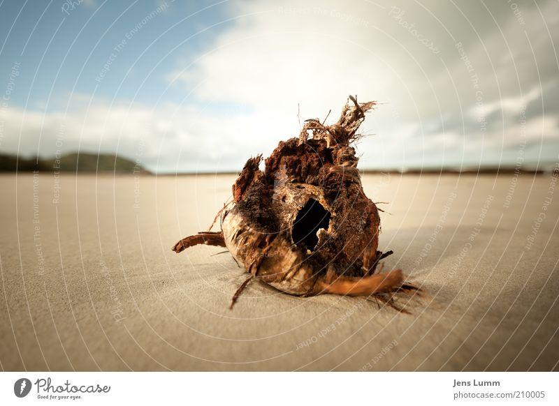 Coconut alt Himmel blau Strand Wolken Einsamkeit Sand braun leer Vergänglichkeit Pflanze Frucht gebraucht verrotten Sandstrand Kokosnuss