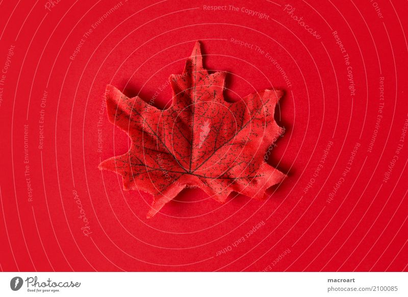 Rotes Blatt auf rotem Untergrund Einsamkeit Herbst Dekoration & Verzierung liegen einzeln herbstlich Single
