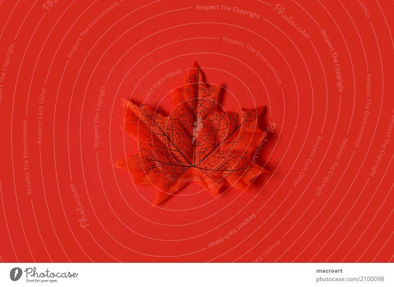 Blatt mehrfarbig einzeln Herbst herbstlich Dekoration & Verzierung Einsamkeit liegen Single rot