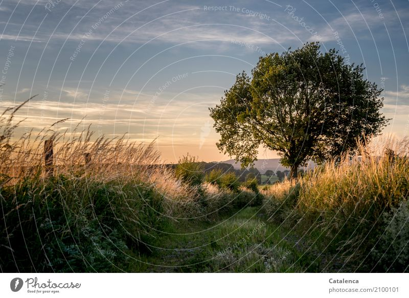 Fernweh wandern Natur Landschaft Himmel Gewitterwolken Sommer Schönes Wetter Baum Gras Sträucher Wiese Fußweg Zaunpfahl ästhetisch blau braun gold grün orange
