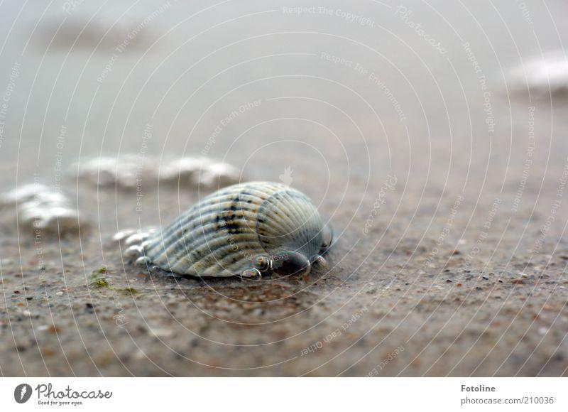 Noch ne Pupsmuschel ;-) Natur Wasser Sommer Meer Strand Umwelt nass natürlich Urelemente nah Ostsee Muschel Wasserblase Muschelschale Herzmuschel