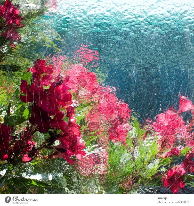 In Bloom Natur schön grün blau Pflanze rot Sommer Farbe Gefühle Blüte rosa frisch Blühend leuchten unklar Umwelt
