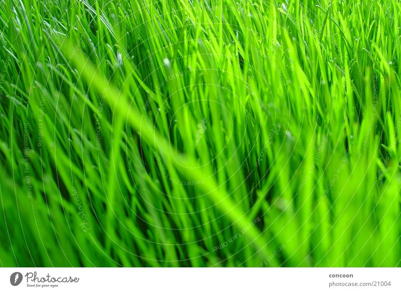 Natural Green grün Pflanze Farbe Gras Frühling frisch Rasen Klarheit intensiv unbearbeitet voluminös