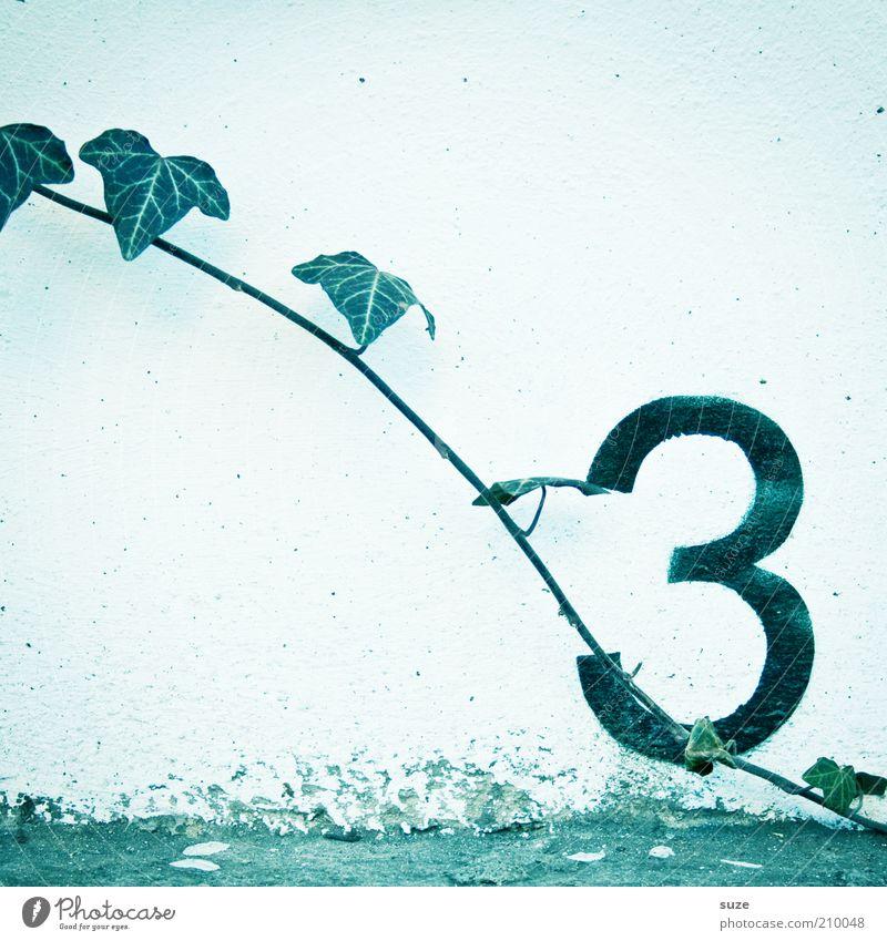 Drei im Wachstum Natur grün weiß Pflanze Blatt Umwelt Wand Mauer Wachstum Beton 3 Schriftzeichen trist Ziffern & Zahlen Symbole & Metaphern einfach