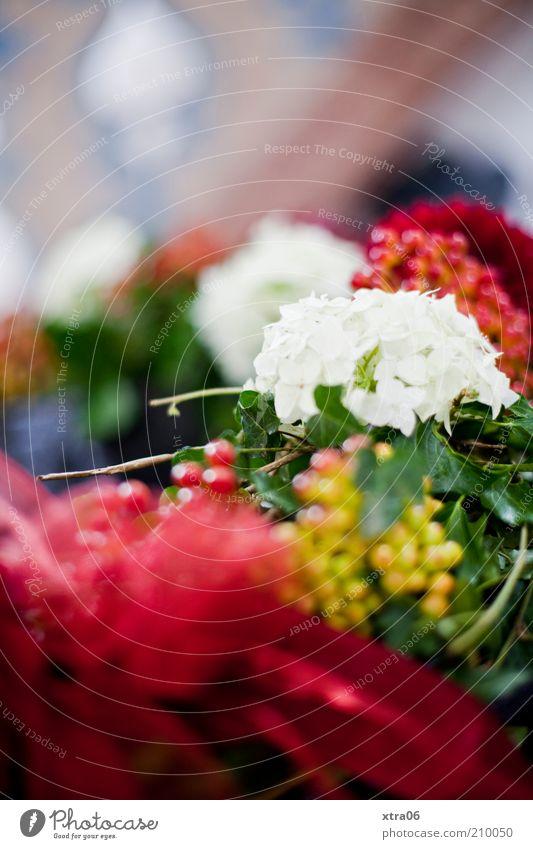 blumenschmuck in der kirche Blume Glück Feste & Feiern Dekoration & Verzierung Kirche Taufe Kranz Gebäude Blumenkranz