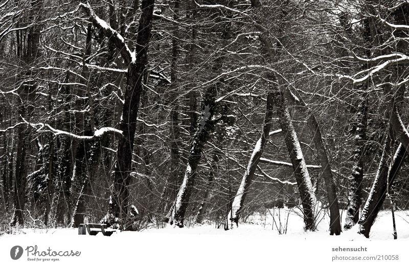 winter im park Natur weiß Baum Pflanze Winter Einsamkeit schwarz Wald kalt Schnee Landschaft Stimmung Park Wetter Baumstamm stagnierend