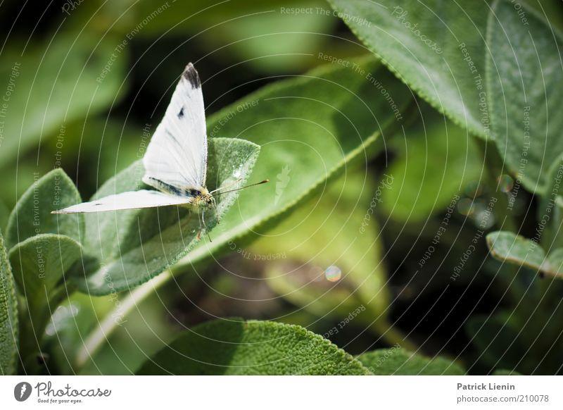 flieg schon los! Umwelt Natur Landschaft Pflanze Tier Urelemente Sommer Blume Blatt Grünpflanze Nutzpflanze Wildpflanze Garten Wildtier Schmetterling