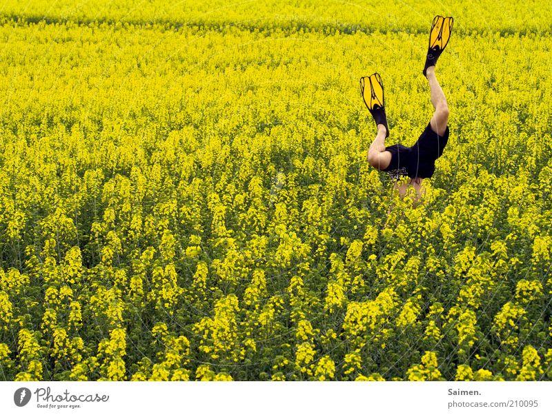 the rapsdiver Mensch maskulin Mann Erwachsene Beine 1 Umwelt Natur Pflanze Feld Blühend Duft Erholung Fitness Sport tauchen außergewöhnlich verrückt Freude