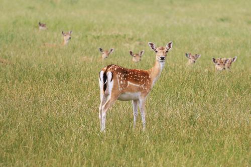 Mutprobe Natur schön Tier Umwelt Gras Zusammensein elegant Wildtier Tiergruppe beobachten Neugier Schutz Wildfleisch Ohr Vertrauen Wachsamkeit