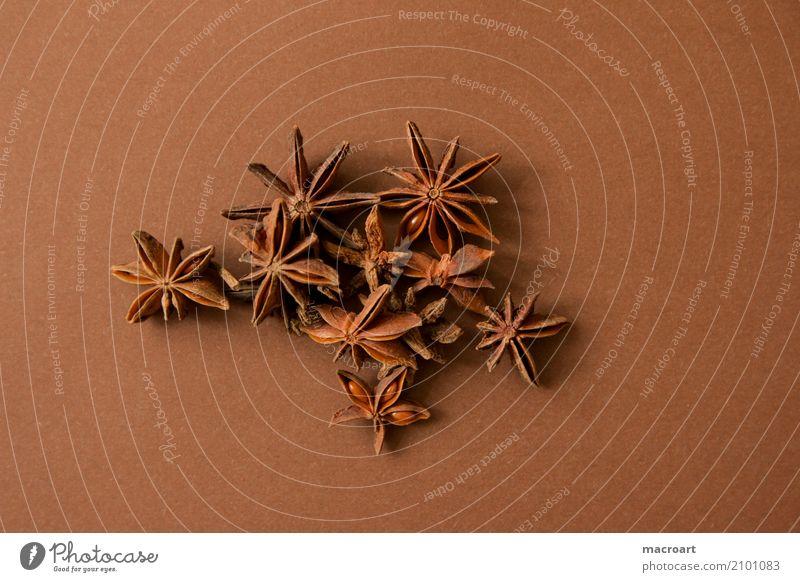 Sternanis auf braunem Untergrund Stern (Symbol) anise sterne Würzig Kräuter & Gewürze getrocknet Frucht Weihnachten & Advent weihnachten weihnachtsgewürz Speise