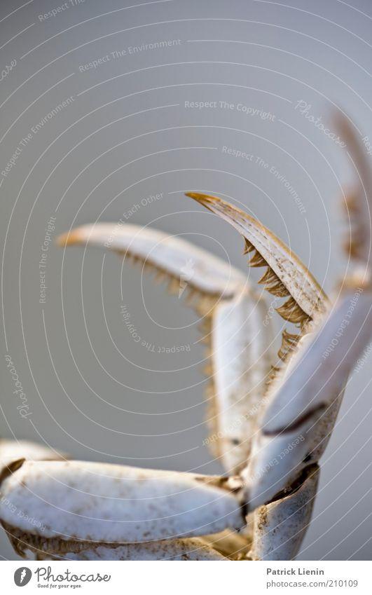 sharp Tier Bewegung Angst Umwelt authentisch bedrohlich Wildtier kämpfen bleich Aggression krabbeln Entsetzen Krallen Schere achtsam gebrauchen