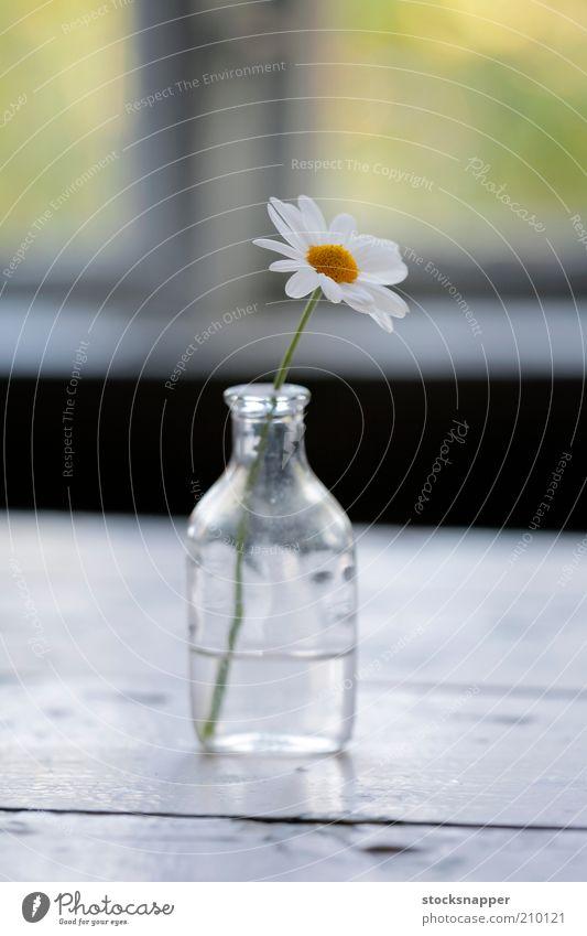 Die Überreste des Sommers weiß Blume klein winzig Flasche