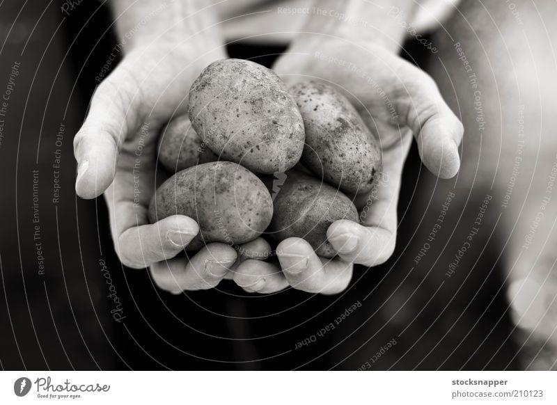 Kartoffeln Hand Hände Lebensmittel Landwirt Beteiligung schalenförmig Schwarzweißfoto Monochrom Ernte