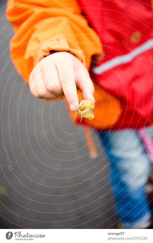Tierrettung Mensch Kind Sommer Hand klein Regen Ausflug Kindheit Wildtier Abenteuer Schutz Neugier entdecken Mut Kleinkind