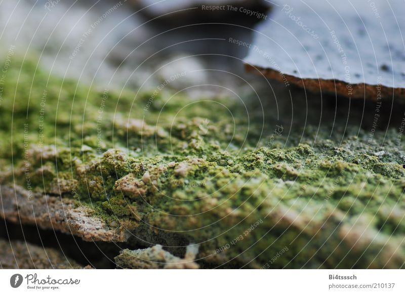 Minigebirge ganz groß Moos Beton dreckig fest kaputt nah blau grün Stimmung authentisch Verfall Vergänglichkeit Zerstörung Farbfoto Makroaufnahme Menschenleer