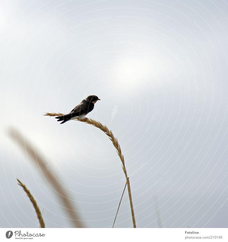 Heeeeeee, ab in den Süden... Natur Himmel Pflanze Wolken Tier Herbst Gras Luft hell Vogel klein Umwelt sitzen Flügel natürlich Wildtier