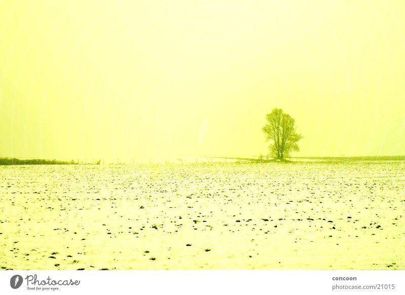 Dem Winter Ade sagen Feld Baum einzeln gelb kalt Dresden Schnee Sonne