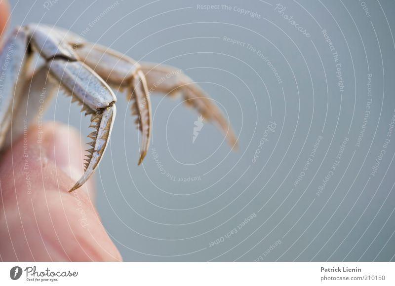 aufgepasst! Mensch Finger Umwelt Natur Tier Wildtier Totes Tier 1 Fingernagel Daumen festhalten Farbfoto Gedeckte Farben Außenaufnahme Textfreiraum rechts